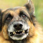 Pies-odgryzł-dziecku-ucho.-Tragedia-w-Jaworznie
